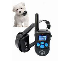 Best Shock collars for training dogs