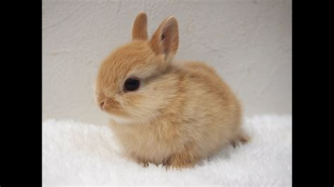 Show me a baby rabbit Image