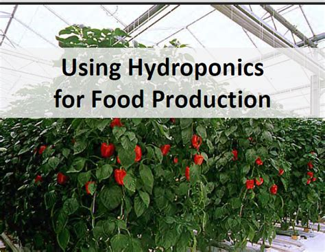 @ Simon  S Simple Hydroponics Plans Giant Ebook  Free House .