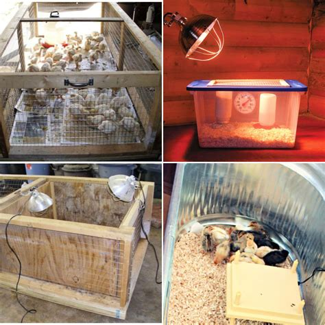 Simple Chicken Brooder Plans