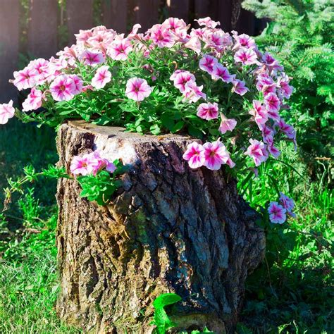 Simple-Flower-Bed-Plans