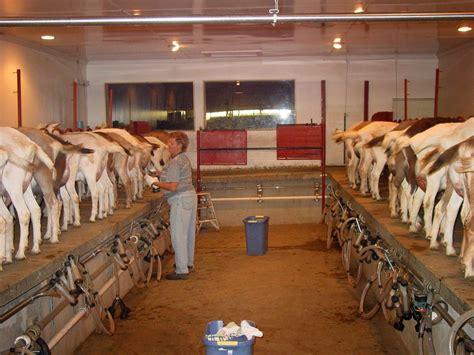 Small-Goat-Dairy-Barn-Plans