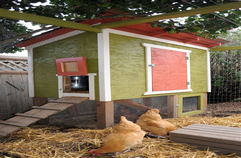 Small-Urban-Chicken-Coop-Plans