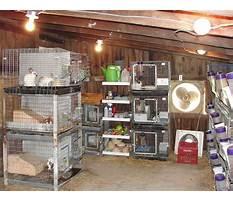 Best Small rabbitry