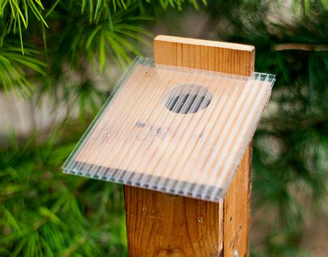 Sparrow Proof Bluebird Box Plans