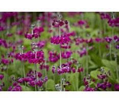 Best Spring flowering garden trees