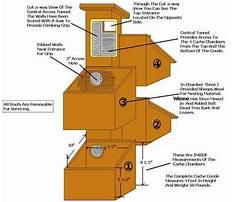 Best Squirrel house plans.aspx