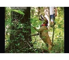 Best Squirrel hunting dog training tips.aspx