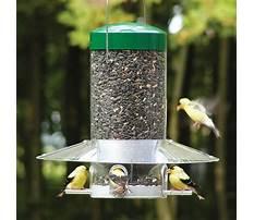 Best Squirrel proof bird feeder lowes.aspx