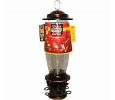 Best Squirrel x bird feeder reviews