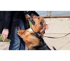 Best Stop dog jumping