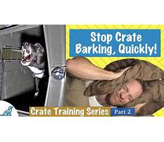 Best Stop dogs from barking at night