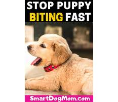 Best Stop nipping puppy