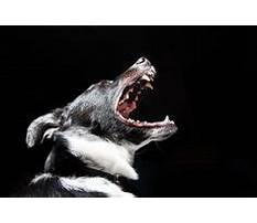 Best Stop your puppy from biting.aspx