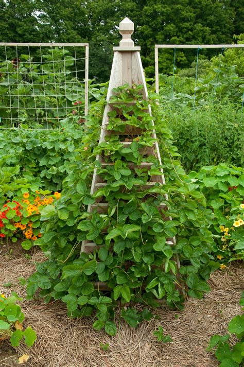 Strawberry-Trellis-Plans
