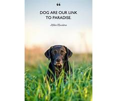 Best Suburban dog training wyndmoor pa