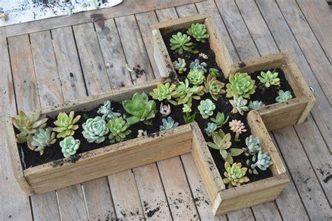 Succulent-Box-Diy