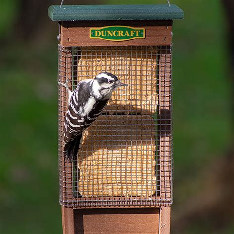 Suet Feeder Plans For Woodpeckers