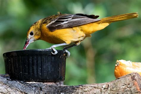 @ Supercharge Your Backyard Bird Feeding With These 16 Tips .