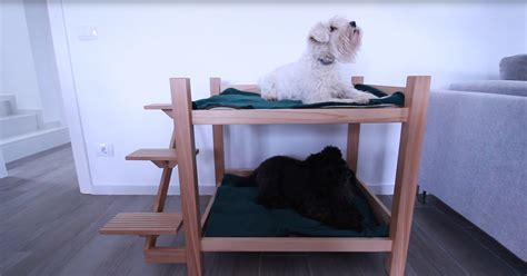 Suspended Dog Bed Diy With Stairs