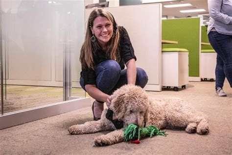 Therapy dog training ri.aspx Image