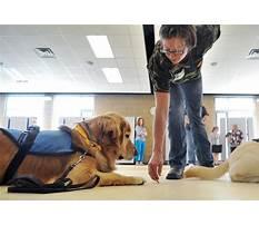 Best Therapy dog training az