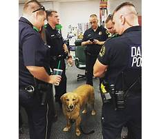Best Therapy dog training dfw