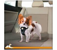Best Toilet training dogs to use pads.aspx