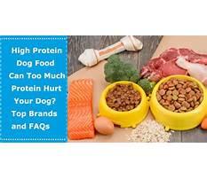 Best Too much protein in dog diet