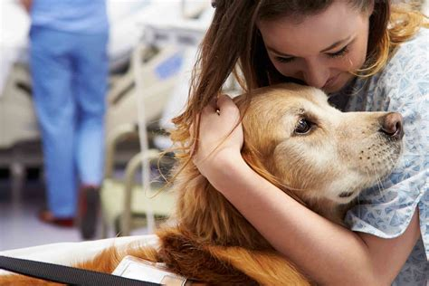 Train dog as therapy dog Image