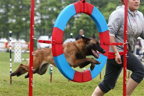 Train dog to do agility Image