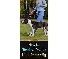 Best Train a dog to heel video.aspx