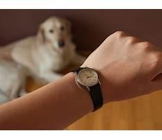 Best Train deaf dog