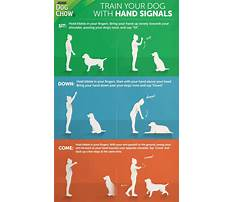 Best Train deaf dog hand signals