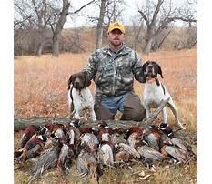 Best Train dog bird hunt