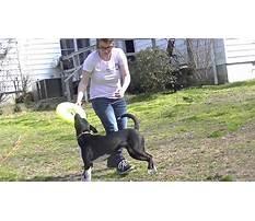 Best Train dog catch frisbee