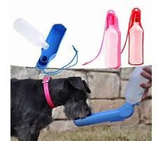Best Train dog drink water bottle