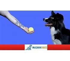 Best Train dog drop ball