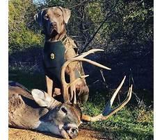 Best Train dog hunt deer