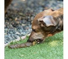 Best Train dog not eat poop
