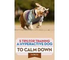 Best Train dog to calm down