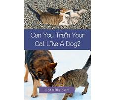 Best Train dog to like cat