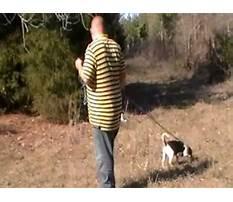 Best Train dog track wounded deer