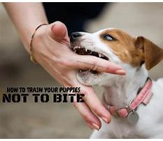 Best Training a dog not to bite