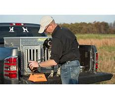 Best Training a hunting dog to come.aspx