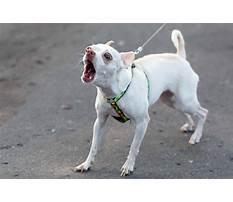 Best Training dog leash aggression.aspx