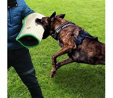 Best Training dogs that bite