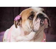 Best Training female american bulldog.aspx