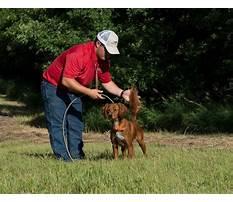 Best Training large dogs.aspx