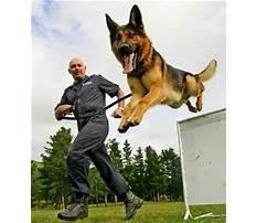 Best Training police dogs nz